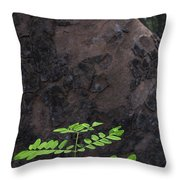 New Leaves Born On Old Tree Throw Pillow