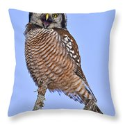 Northern Hawk Owl  Throw Pillow