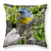 Northern Parula Throw Pillow