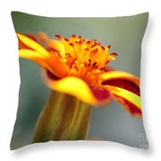 Novelty French Marigold Named Mr. Majestic Throw Pillow