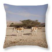Onager Equus Hemionus Throw Pillow
