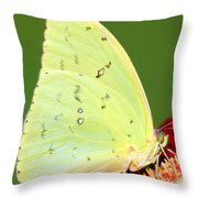 Orange Barred Sulfur Butterfly Throw Pillow