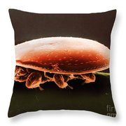 Oribatid Mite Throw Pillow