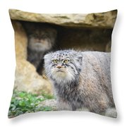 Pallas Cat Throw Pillow