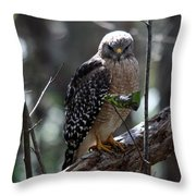 Red - Shouldered Hawk II Throw Pillow
