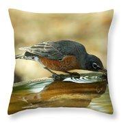 Robin Drinking Throw Pillow