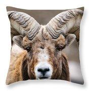 Rocky Mountain Big Horned Sheep Throw Pillow
