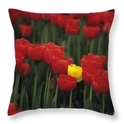 Rows Of Red Tulips With One Yellow Tulip Throw Pillow