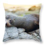 Sea Lion Throw Pillow