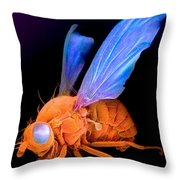Sem Of A Fly Drosophila Throw Pillow