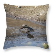 Shorebirds Throw Pillow