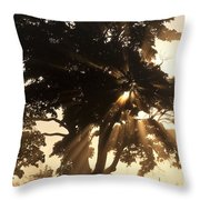 Silhouetted Tree With Sun Rays Throw Pillow
