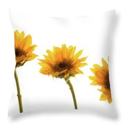 Small Sunflowers Or Helianthus Throw Pillow