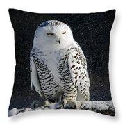 Snowy Owl On A Twilight Winter Night Throw Pillow