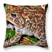 Southern Toad Bufo Terrestris Throw Pillow