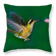 Speckled Hummingbird Throw Pillow