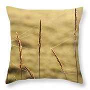 Spider Webs In Field On Tall Grass Throw Pillow