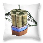 Spinal Cord Throw Pillow