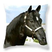 Stallion Throw Pillow by Paul Tagliamonte