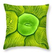 Stoma Of Loasa Plant, Sem Throw Pillow