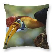 Sulawesi Red-knobbed Hornbill Male Throw Pillow
