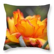 Sundial Portulaca Throw Pillow