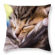 Sweet Small Kitten  Throw Pillow