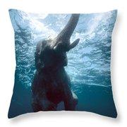 Swimming Elephant Throw Pillow