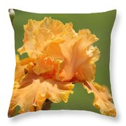 Tall Bearded Iris Named Penny Lane Throw Pillow