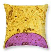 Tem Of Epididymis Throw Pillow