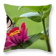 Tiger Swallowtail Butterfly On Zinnia Throw Pillow