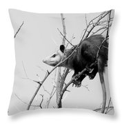 Treed Opossum Throw Pillow