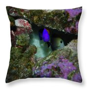 Tropical Fish In Cave Throw Pillow