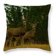 Two Young Bucks Throw Pillow