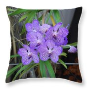 Vanda Orchid Throw Pillow