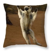 Verreauxs Sifaka Hopping Berenty Throw Pillow