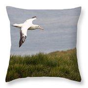 Wandering Albatross Throw Pillow