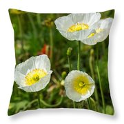 White Iceland Poppy - Beautiful Spring Poppy Flowers In Bloom. Throw Pillow