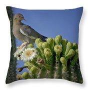 White-winged Dove Atop A Saguaro Throw Pillow