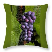 Wine In A Web Throw Pillow