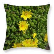 Yellow Ice Plant In Bloom Throw Pillow
