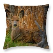 Young Mulie Throw Pillow