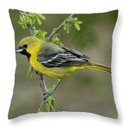 Young Orchard Oriole Throw Pillow