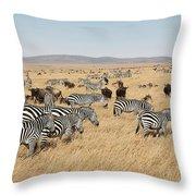 Zebra Migration Maasai Mara Kenya Throw Pillow
