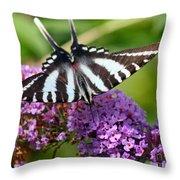 Zebra Swallowtail Butterfly At Butterfly Bush Throw Pillow