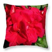 Zonal Geranium Named Candy Cherry Throw Pillow