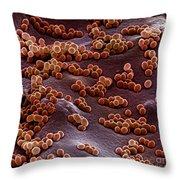 Staphylococcus Aureus Throw Pillow