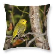 Yellow Warbler Throw Pillow