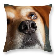Portrait Of Red Bone Coon Mix Dog Throw Pillow