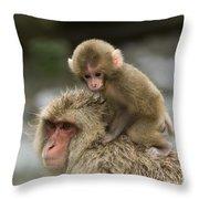 Snow Monkeys Japan Throw Pillow